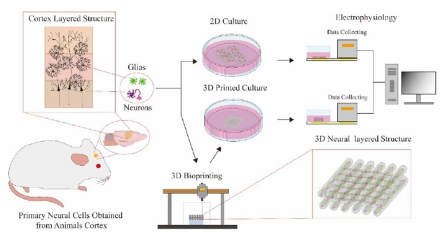 Extracting the neural cells for bioprinting. Image via Tsinghua University.