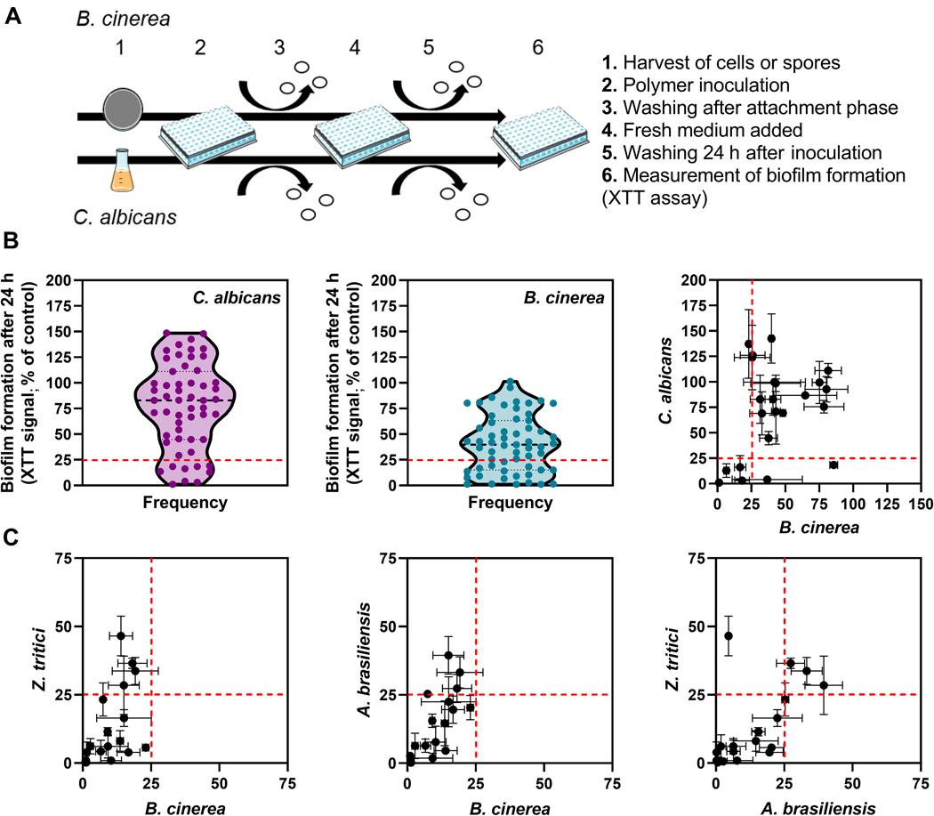 Biofilm formation on potential anti-attachment materials. Image via Science Advances.