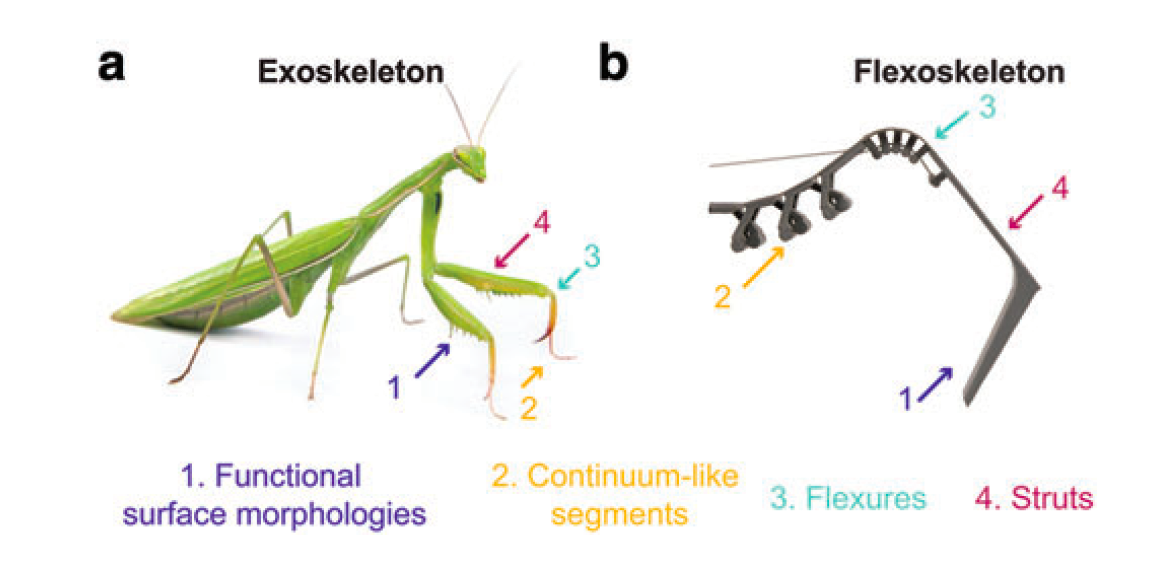 The flexoskeleton manufacturing technique is inspired by the outer shells of insects. Image via Soft Robotics.