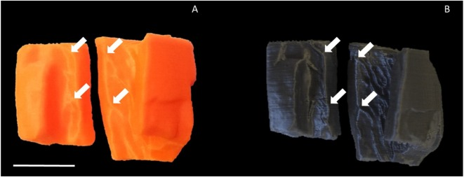 UK researchers use FFF 3D printing to enhance CSI evaluation of cranium fragments  1