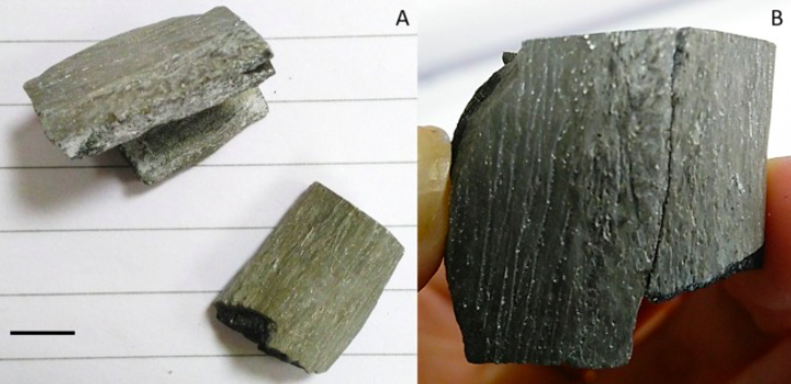 Both sets of burned 3D printed femur fragments (pictured) were able to be pieced back together. Image via Science Direct.