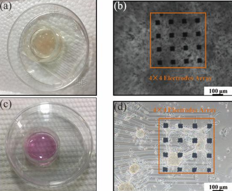 Testing the 2D and 3D formations with an electrode array. Image via Tsinghua University.
