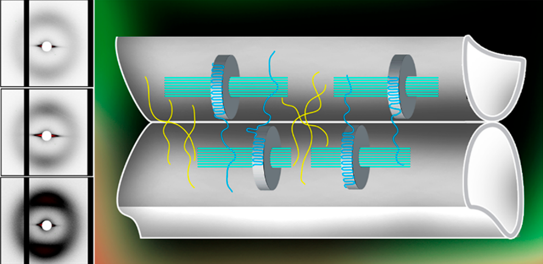 The researchers' kebab-like chains (pictured) occurred in the interface between two adjacent filaments. Image via the Applied Materials and Interfaces journal.
