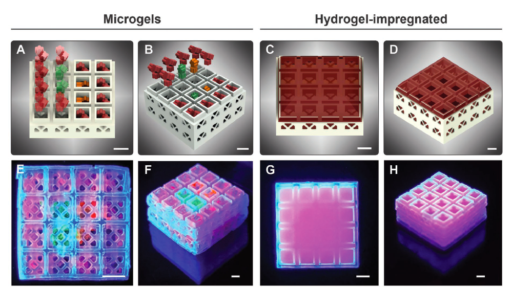 Oregon researchers develop lego-inspired 3D printed therapeutic 'bone bricks' 1