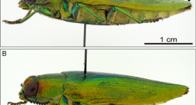 Featured image shows a lateral photo of the beetle Burprestidae taken with lighting provided by the team's dome. Image via the Scientific Reports journal.