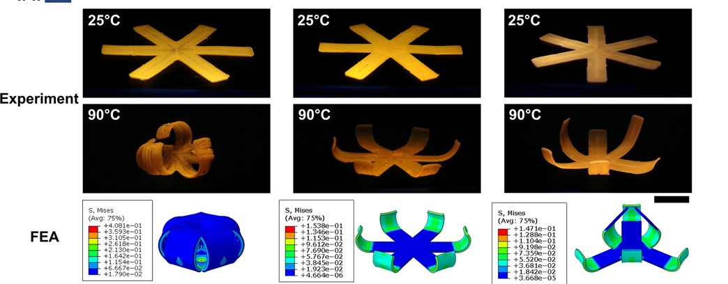 A 3D printed LCE petal structure being actuated. Image via UC San Diego.