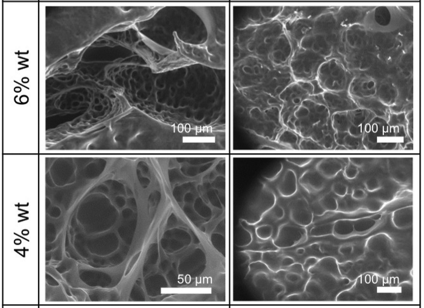 The researchers' tests revealed that higher ECM porosity corresponded with lower rates of cell proliferation. Image via the Biomaterials journal.