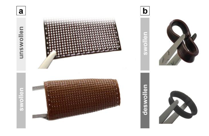 Adding lignen to the team's biopolymer mixture was found to make it less soluble or prone to swelling. Image via the ACS Applied Bio Materials journal.