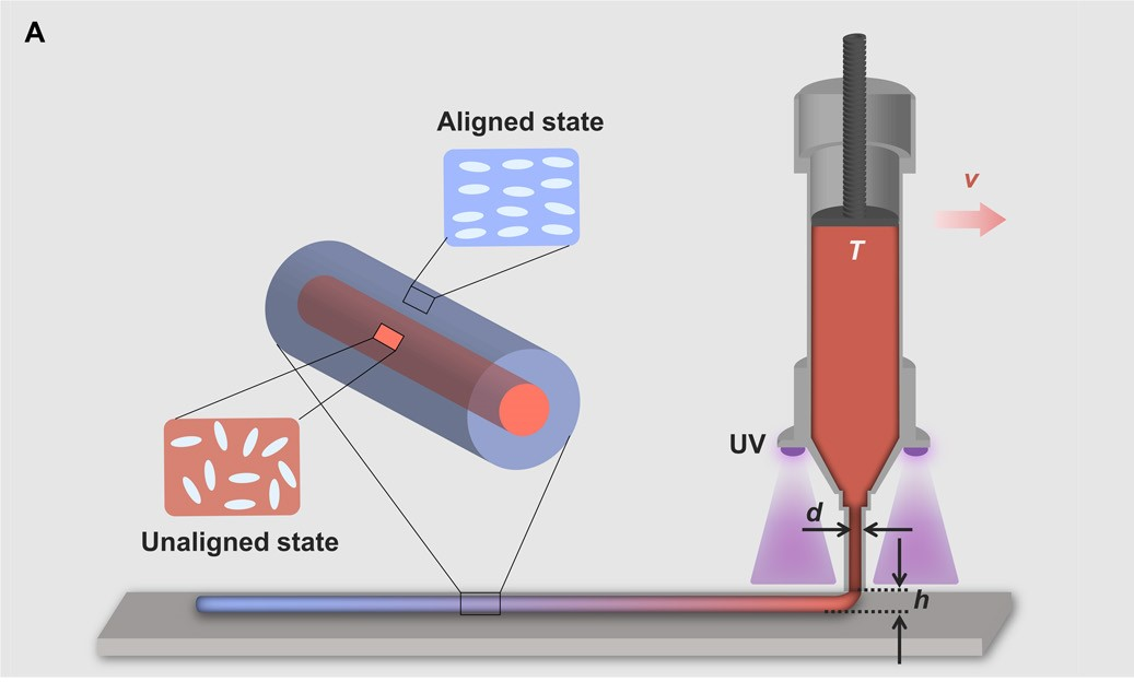The LCE extrusion process. Image via UC San Diego.