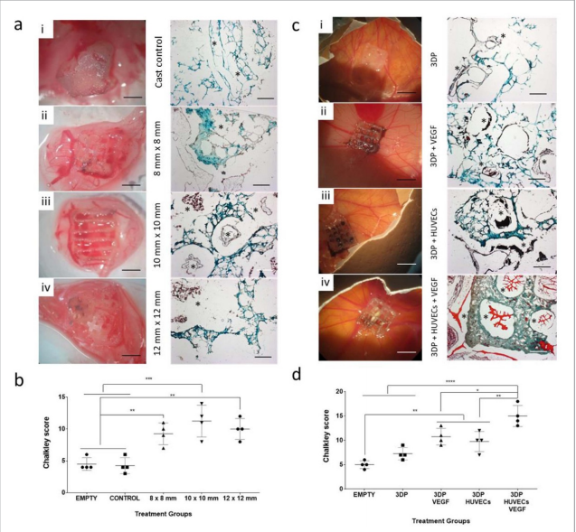 . Functional investigation of 3D printed scaffold vascularisation in a CAM model. Acellular 3D printed 3-3-3 scaffolds were implanted on the CAM compared to cast control. Image via Biofabrication journal.