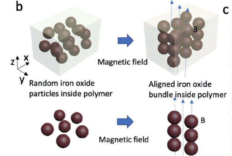 The researchers used an innovative magnetic field-assisted 3D printing process to create their microneedles. Image via the Advanced Functional Materials journal.