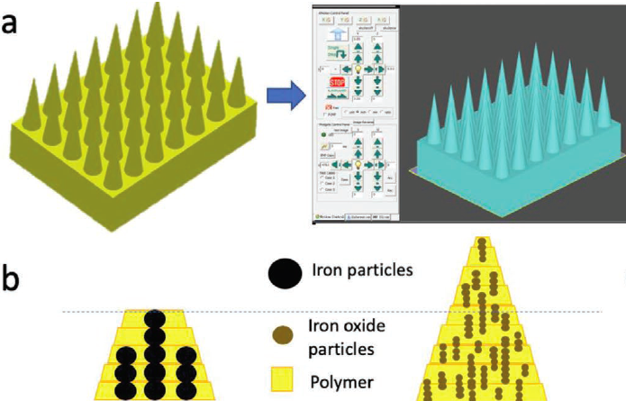 The joint research team's bio-inspired needles were constructed using iron-infused polymers. Image via the Advanced Functional Materials journal.