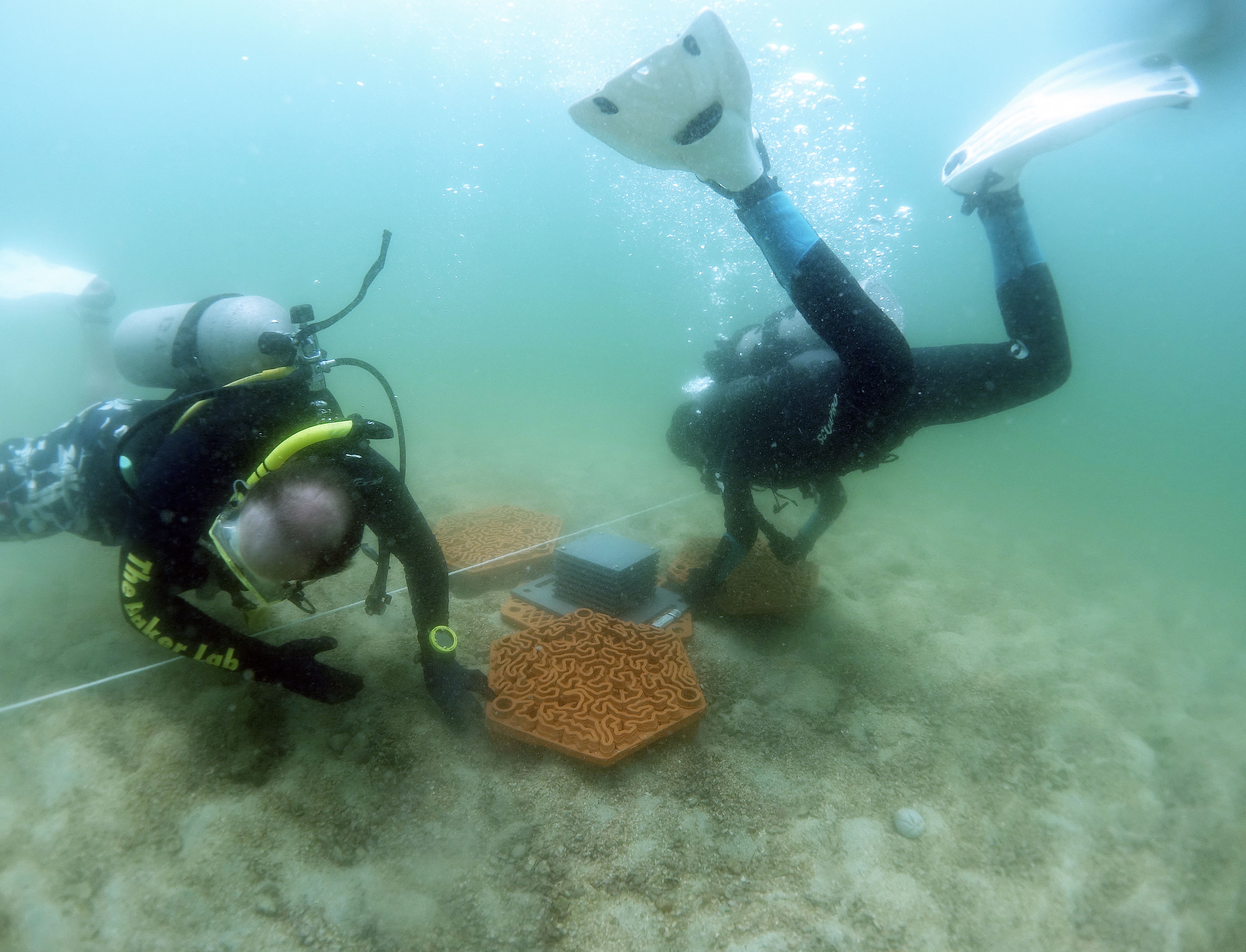 Researchers placing the tiles on the seafloor for coral attachment. Photo via Hong Kong University.