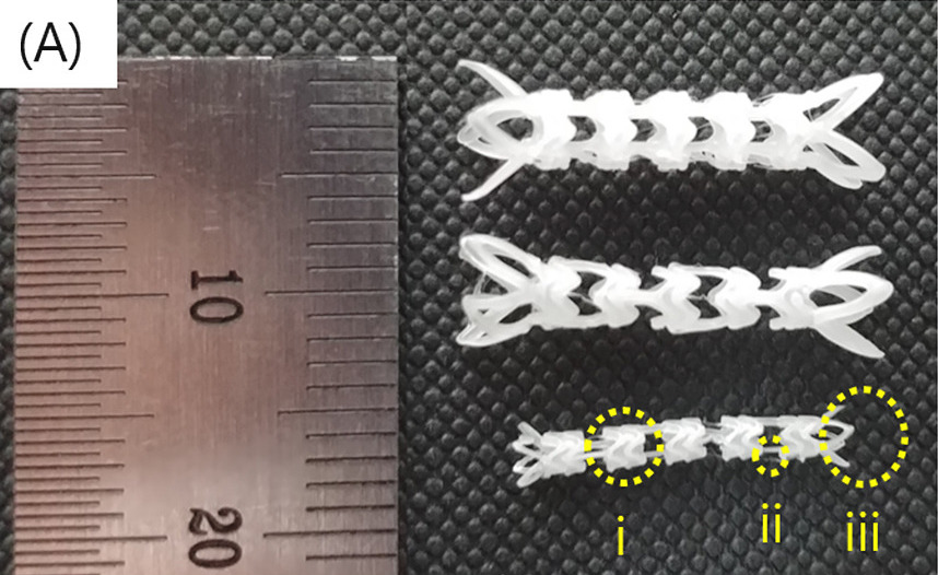 The POSTECH team's 3D printed stents (pictured) proved capable of reducing inflammation during in-vitro lab testing. Photo via the Biomaterials journal.