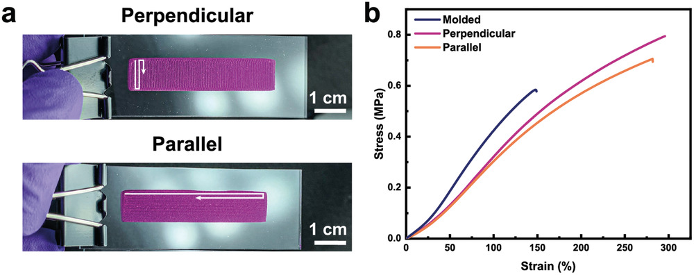 DNGH stripes printed with perpendicular (top) or parallel (bottom) filament orientation to show the effect of printing direction on mechanical properties. Image via Advanced Functional Materials.