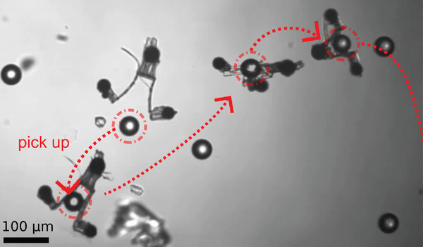 In a more practical application of their 2PP technique, the team developed magnetically-controllable nanoscale tweezers. Image via the Advanced Materials Technologies journal.