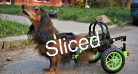 Sliced logo on the wheelchair for dogs.