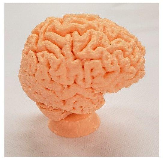 3D printed human brain model learning aid. Image via Vaclav Krmela/MyMiniFactory.
