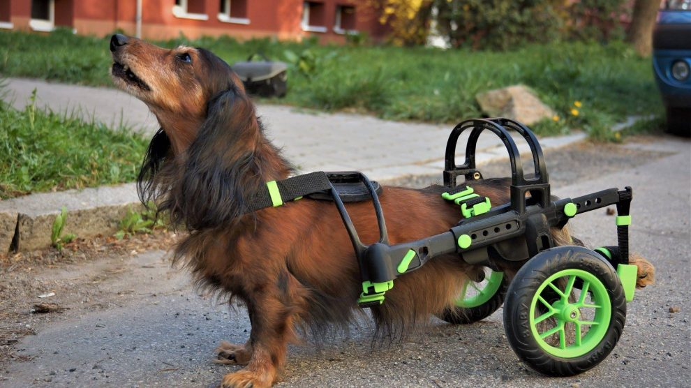 A wheelchair 3D printed for dogs. Photo via AnyoneGo.