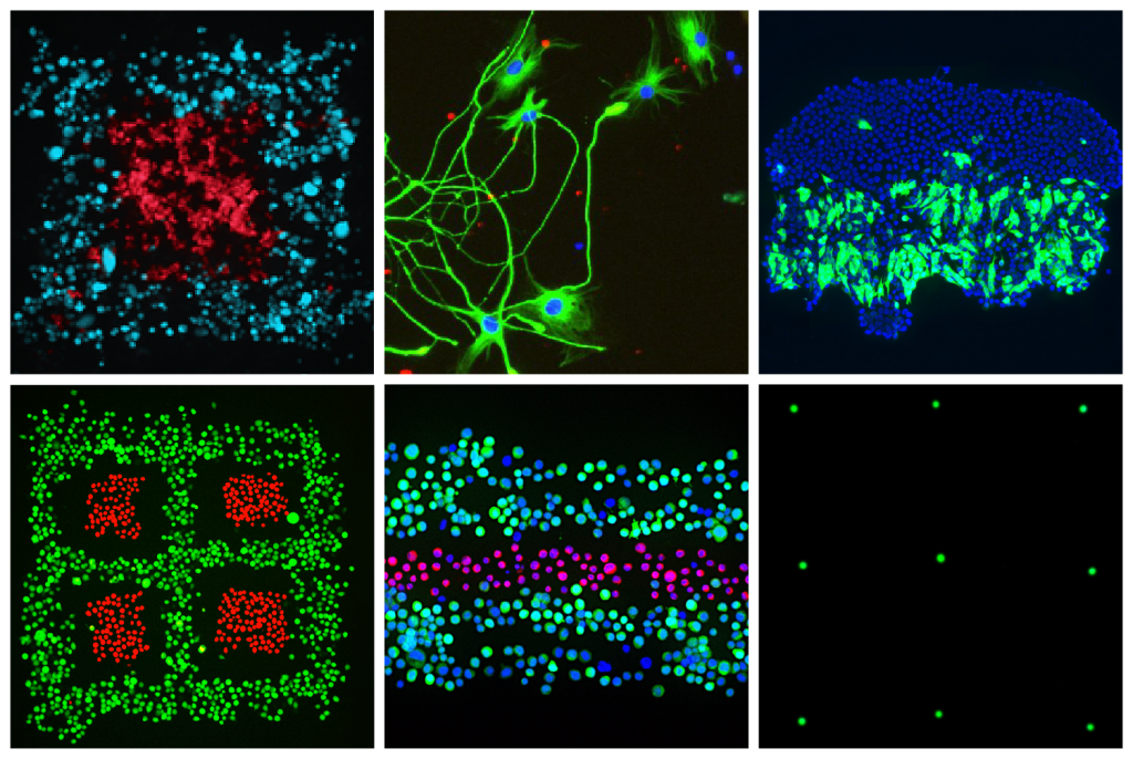 Using Fluicell's Biopixlar platform, the scientists were able to precisely 3D print a series of cell-based structures (pictured). Image via Fluicell.
