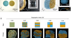 Droplet printing generates viable bacterial communities with defined micron-scale patterning.