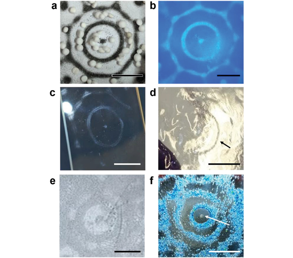 Examples of various materials and substrates patterned using sonolithography. Image via Uni of Bristol.