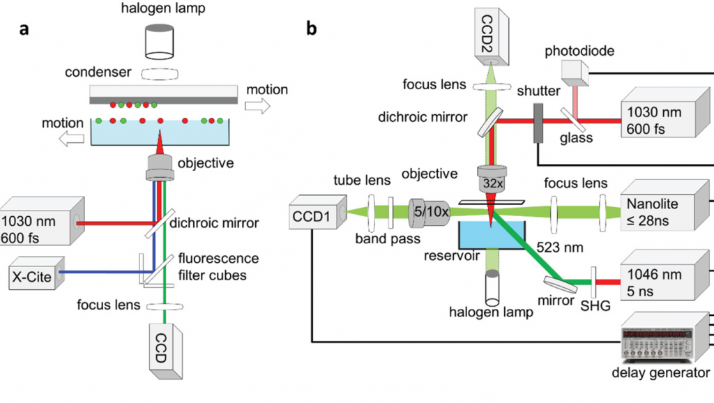 The Munich scientists' revised 3D bioprinting process.