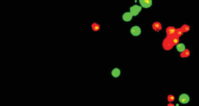 GFP-labelled human stem cells.