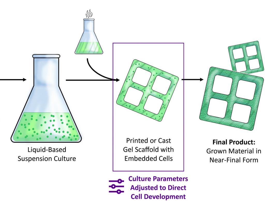 The MIT scientists' 3D bioprinting method.