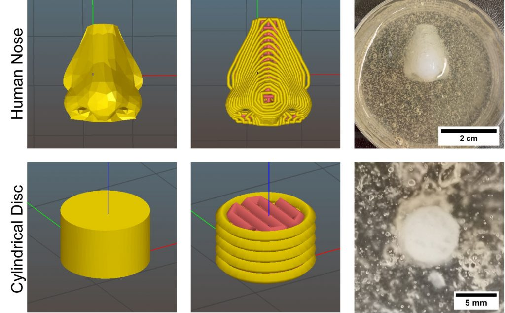 A set of 3D models showing the team's 3D bioprinted specimens.