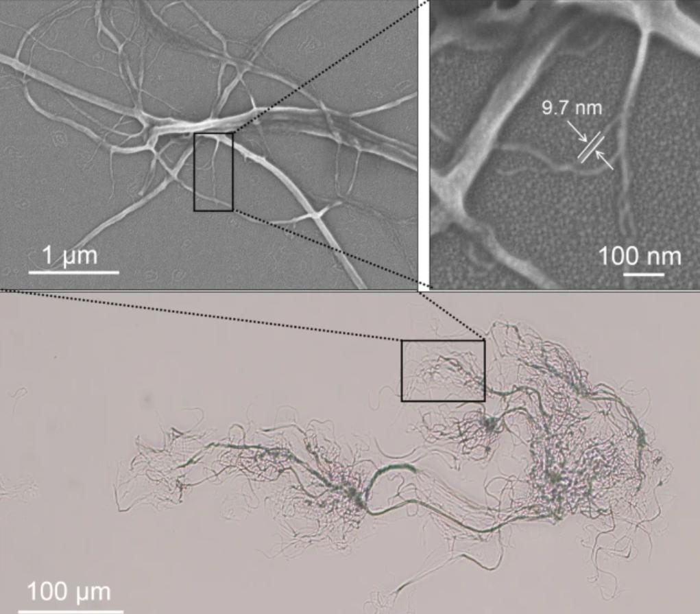 SEM imaging of the alginate reinforcements. Image via North Carolina State University.