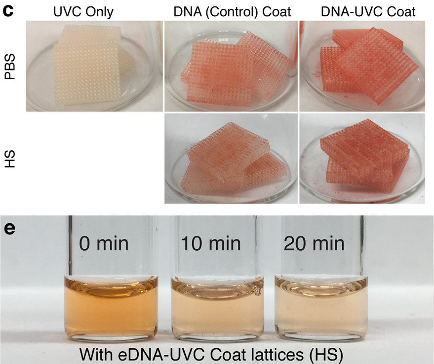 The researchers 3D printed DNA-loaded and control parts.