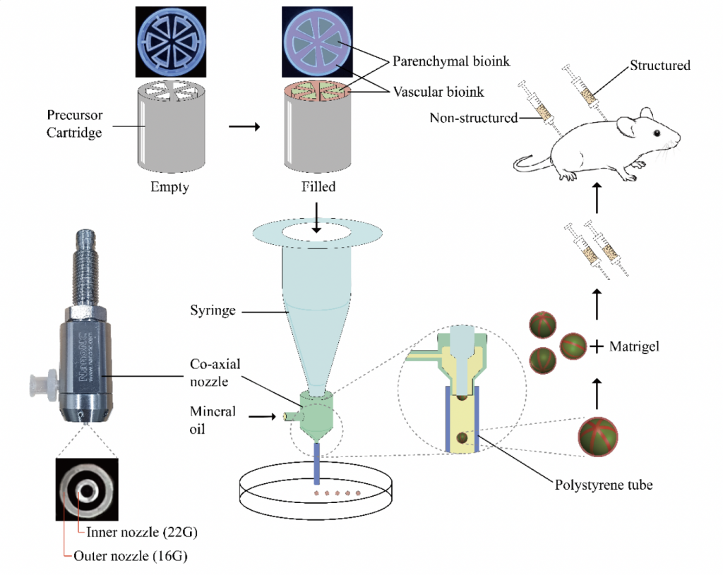 The researchers' 3D bioprinting and implantation technique.