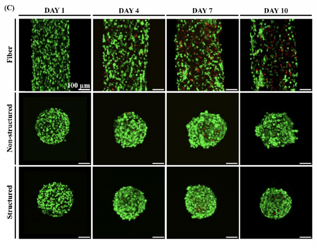 Imaging of the cells' viability over ten days.