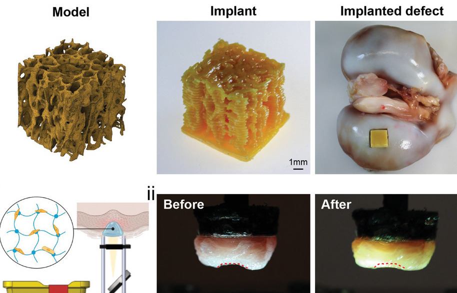 The researchers' 3D printed implant alongside an in-situ bioprinted specimen.