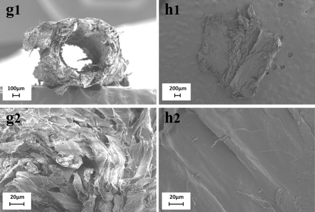 SEM images of the scientists' 3D printed fruit sensors.