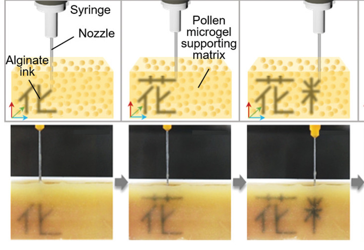 A diagram of the researchers' pollen-based printing method.