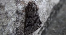 A moth camouflaged against a cliff face.