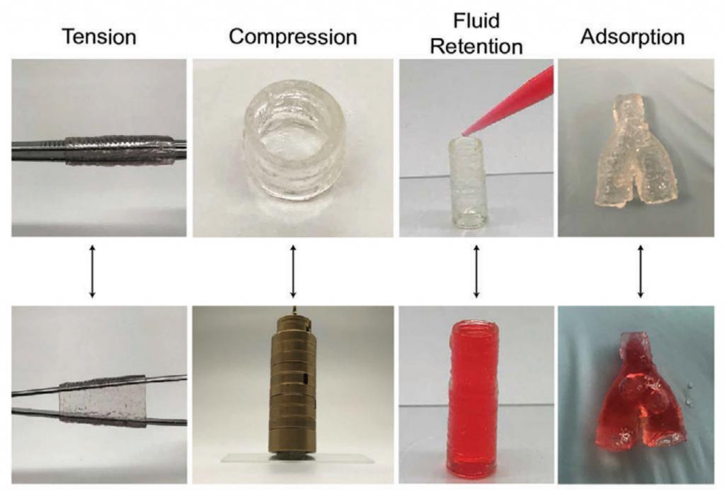 Le modèle de vaisseau sanguin bio-imprimé en 3D en action.  Photos via TAMU.