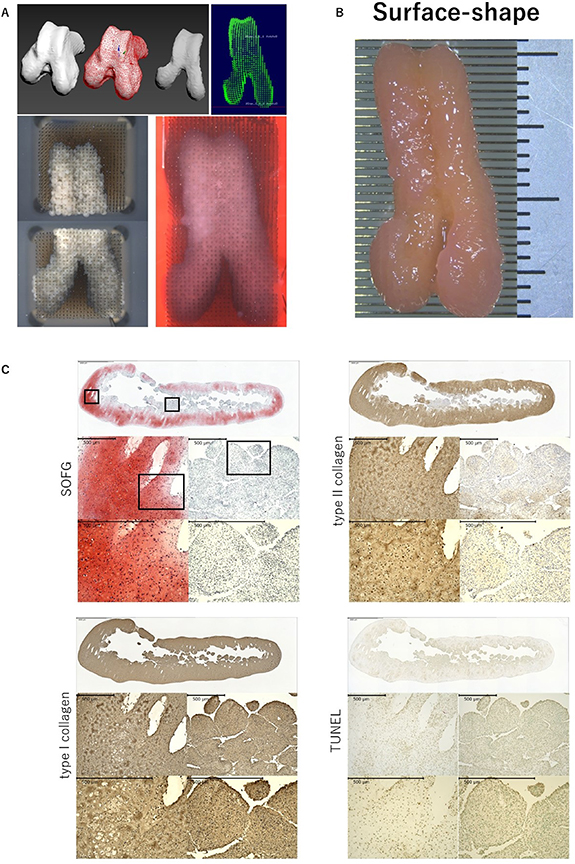 Bio-3D printer design data and images of the articular surface-shape construct. Image via Biofabrication.