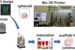 Scientists 3D bioprint articular cartilage protheses from stem cells