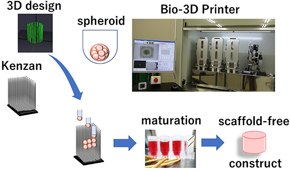 Schematic representation of the 3D printing process. Image via Biofabrication.