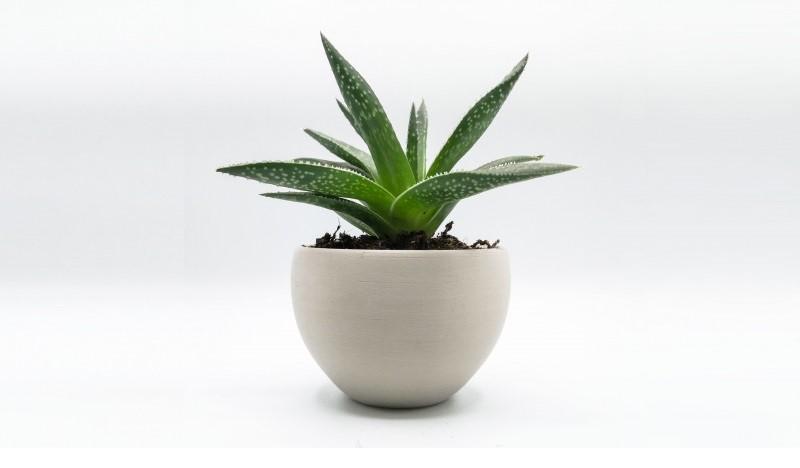 A plant pot 3D printed using Filaflex Purifier. Photo via Recreus.