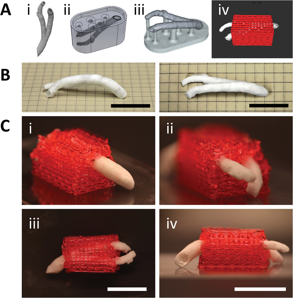 Coronary VascFold fabrication and integration with a 3D printed surrounding hydrogel structure. Image via Advanced Materials.