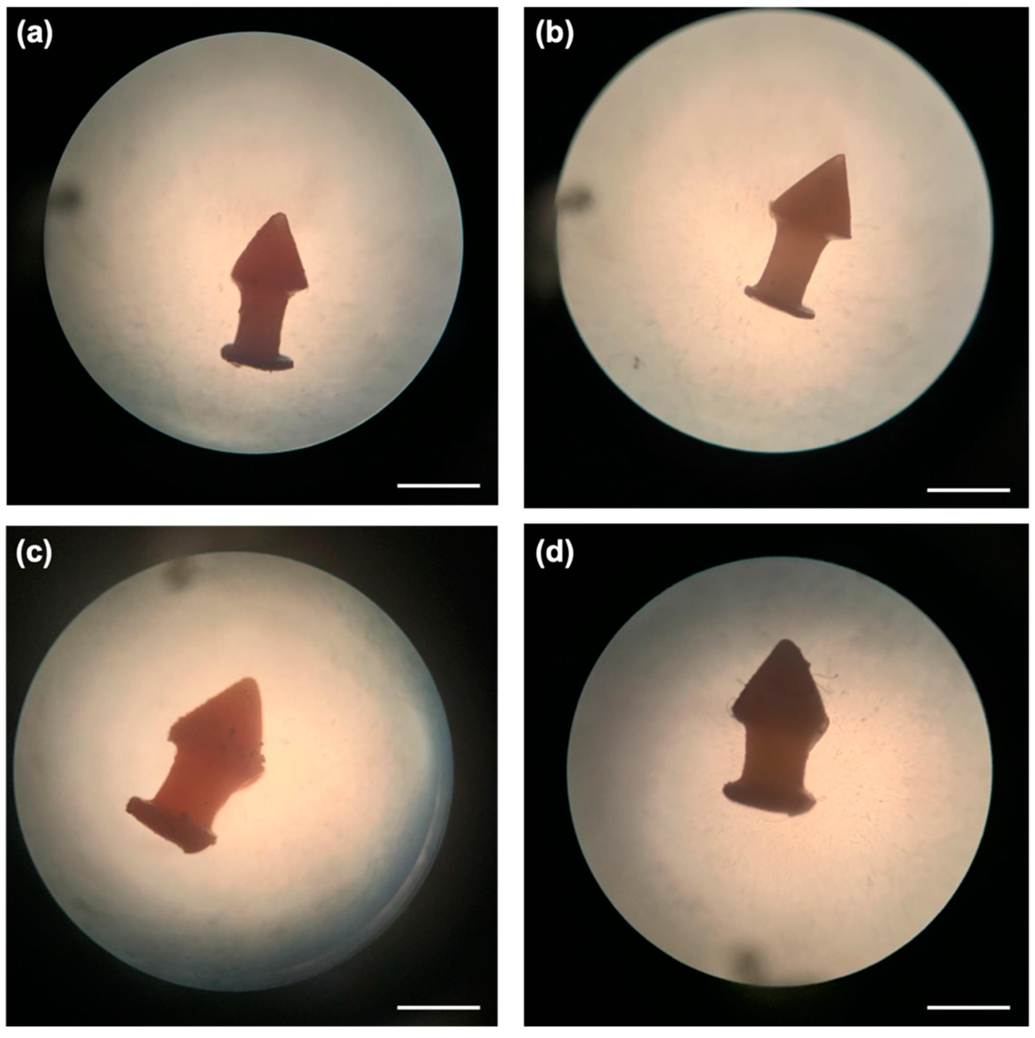 Light microscope images of the DLP 3D printed (a) D10, (b) D10PEG, (c) D20, and (d) D20PEG punctal plugs. Image via MDPI.
